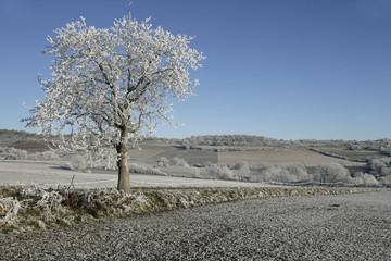 Fotoväggar - Hoar frost,