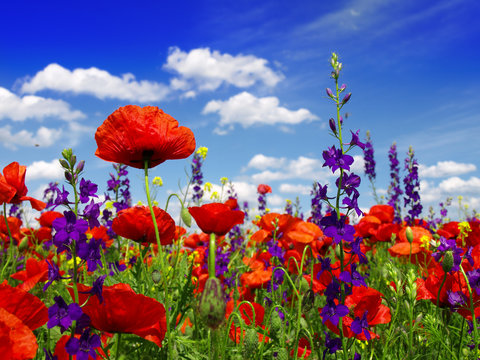 Summer wildflowers and clouds