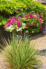 Hanging basket petunias ornamental grasses