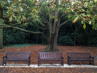 Parc paisible en automne