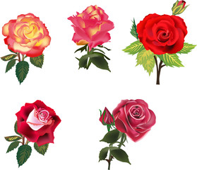 five isolated red and orange roses collection