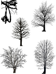 bare trees silhouette collection isolated on white