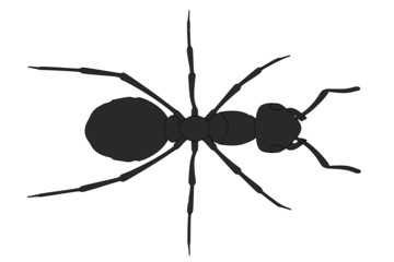cartoon image of formica rufa