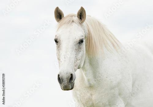 Fototapete Portrait of beautiful white horse