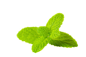 Fresh mint herb on isolated white