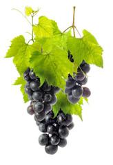 beautiful grapes 1