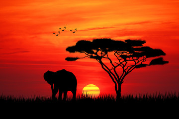 Elephant silhouette at sunset Wall mural