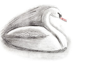 children drawing - white swan