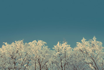 Wall Mural - ice winter woods under sky - vintage retro style