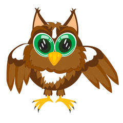 Cartoon of the owl on white