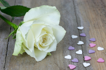 close up of a white rose and colored heart candies