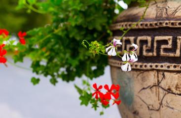 flower, flowerbed Petunia