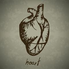 Doodle Human heart
