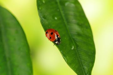 Beautiful ladybird on green plant