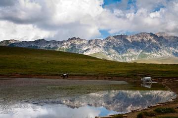 vallata montagna italia con animali