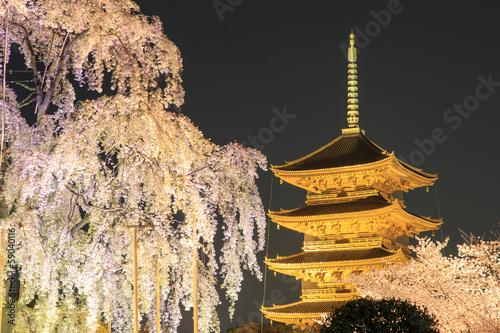 Fototapete 東寺 夜桜ライトアップ