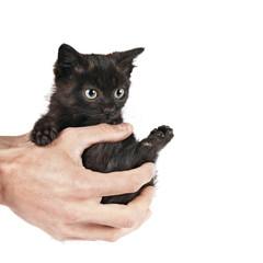 gattino in mano sfondo bianco