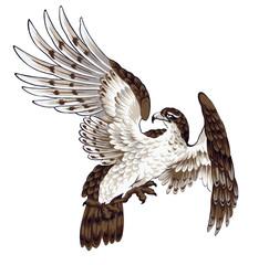 日本画の鷹