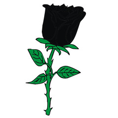 vector drawing of a rose