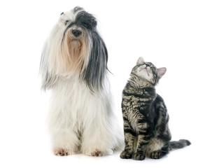 Fototapete - tibetan terrier and kitten