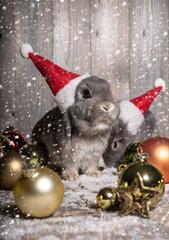 weihnachtshasen