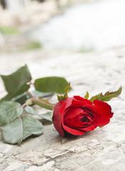 beautiful roses on stone background.