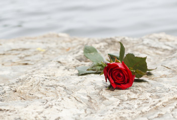 beautiful roses on stone background.