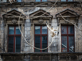 Old House Facade with Monkey Sculpture in Berlin, Germany