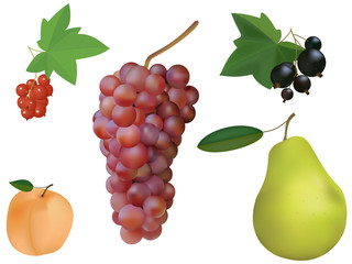 Fruit and berry set isolated on a white background.