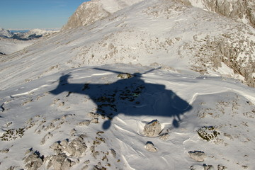 Shadow of the cougar