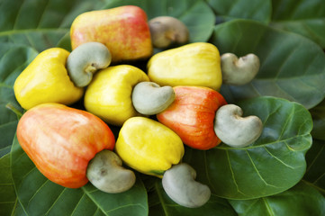 Fresh Ripe Brazilian Caju Cashew Fruit
