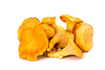 Autumn chanterelles mushrooms