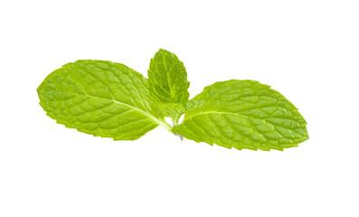 Mint leaf.