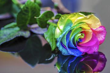 Rainbow Rose Reflection
