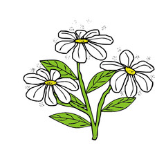 vector drawing of a daisy