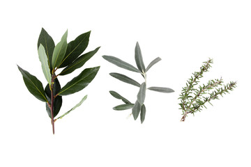 detail of the medicinal plant in closeup over white background