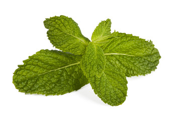 outbreaks of herbs for cooking isolated