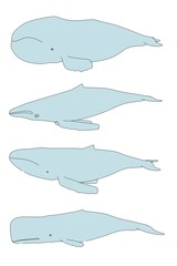 cartoon image of sea whales
