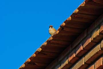 a bird on the roof