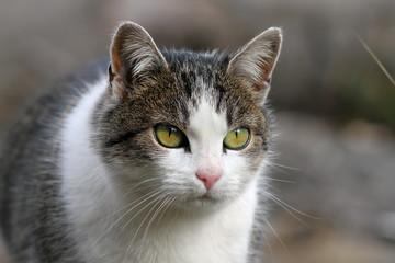 curious looking cat portrait