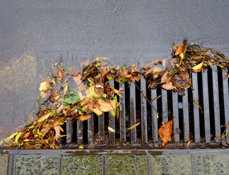 flood of leaves