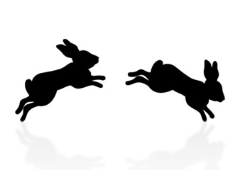 springende Hasen - jumping bunny