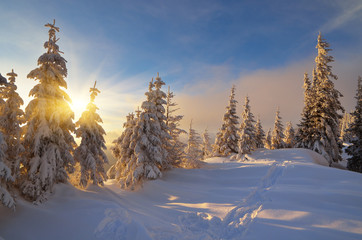 Wall Mural - Sunny winter evening