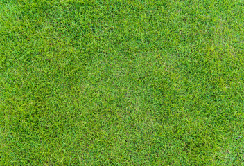 Papiers peints Herbe green grass pattern from golf course at sunset tim