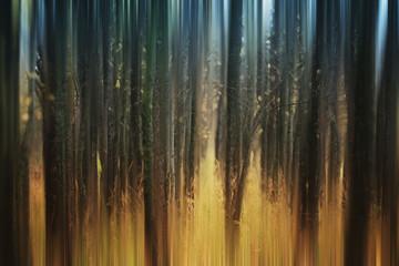 streszczenie niewyraźne jesień las - 59352541