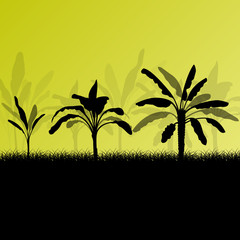 Exotic banana tree plants plantation detailed silhouette landsca