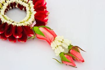 close up of Jasmine Garland on white background