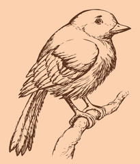 """Vector drawing of a series of sketches """"Birds"""". European Robin"""