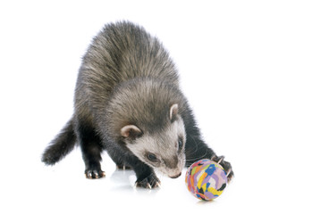 brown ferret and ball Wall mural