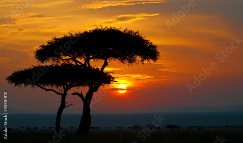 Single Acacia Tree at Sunrise, Masai Mara, Kenya без смс